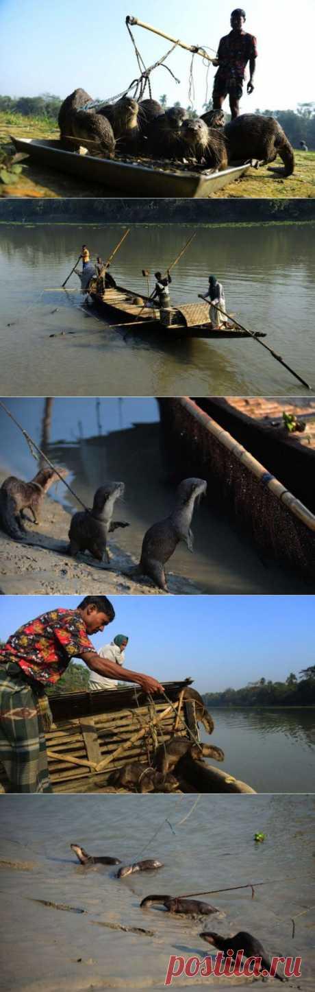 (+1) тема - Особенности национальной рыбалки Бангладеша | Непутевые заметки