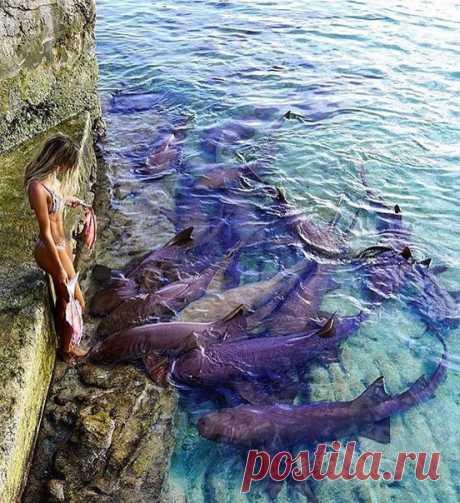 Где-то на Багамах... Доброе утро!