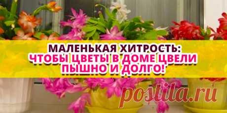 Маленькая хитрость: чтобы цветы в доме цвели пышно и долго! | Полезные советы