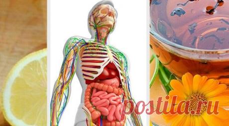 Натуральные средства для детоксикации лимфатической системы Детоксикация лимфатической системы улучшает общее состояние здоровья. Это лучшая профилактика большинства серьезных проблем со здоровьем, в том числе онкологии.
