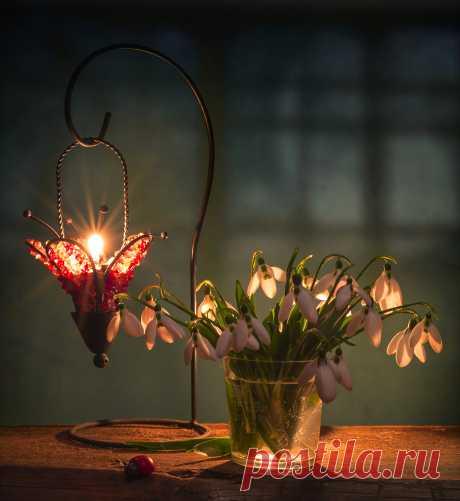 Фотография Ночь с подснежниками из раздела натюрморт №6894817 - фото.сайт - Photosight.ru