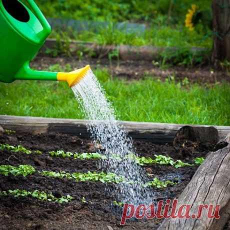 Выращивание редиса: 8 секретов небывалого урожая.