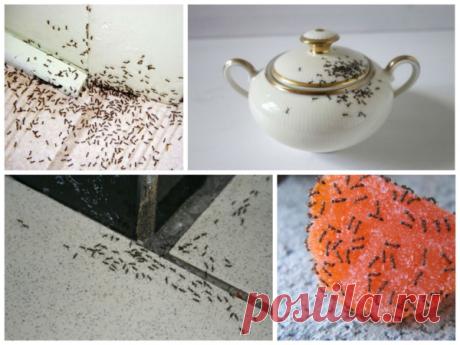 Не выбрасывайте спитый кофе, если у вас на участке есть муравьи | Строили-построили | Яндекс Дзен