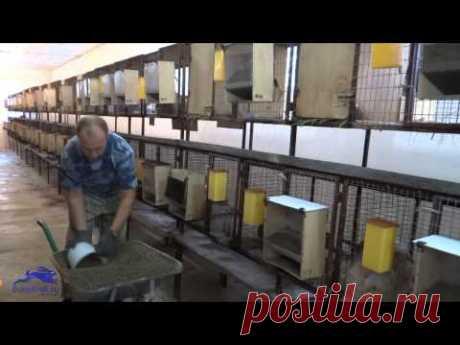 Бункерные кормушки для кроликов, кормление