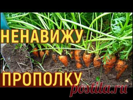 Выращивание УРОЖАЙНОЙ моркови
