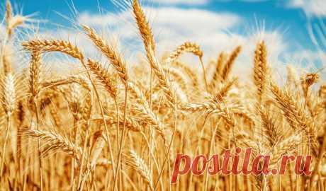 15 растений, проростки семян которых стоит включить в рацион Пророщенные семена и зерна злаков считаются одним из самых полезных видов пищи. Они легко усваиваются, хорошо совмещаются с другими продуктами и содержат максимальное количество биологически активных ...