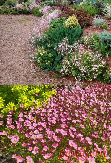 Еще 6 растений для вертикали в моем саду