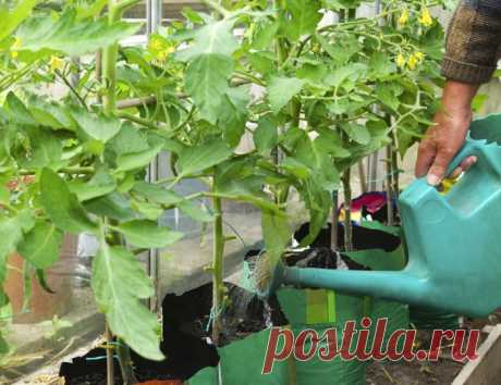 Огурцы зимой на подоконнике – что нужно для получения хорошего и вкусного урожая