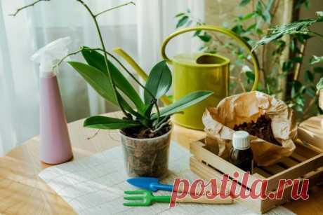 Период покоя у фаленопсиса — когда ждать цветения? Уход в домашних условиях. Фото — Ботаничка.ru