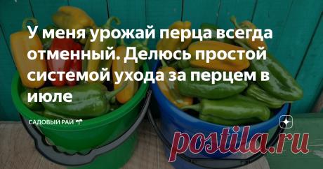 У меня урожай перца всегда отменный. Делюсь простой системой ухода за перцем в июле   Садовый рай 🌱   Яндекс Дзен