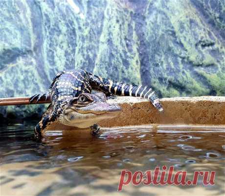Опубликованы лучшие фото животных, сделанные в зоопарках и аквариумах - Новости Mail.ru