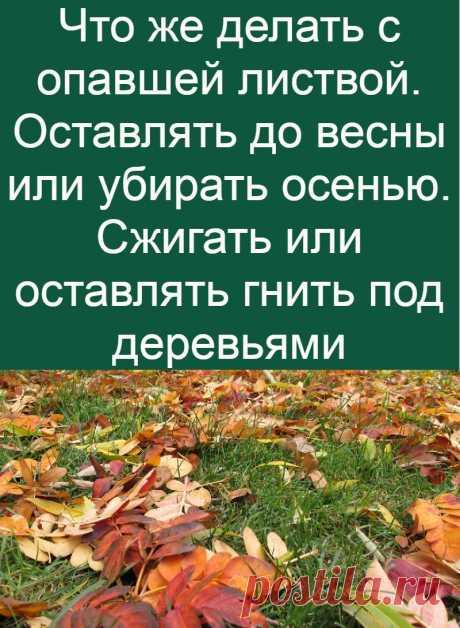 Что же делать с опавшей листвой. Оставлять до весны или убирать осенью. Сжигать или оставлять гнить под деревьями
