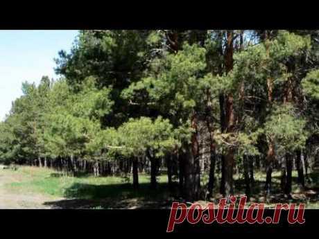 Весенние краски леса | Кругозор - YouTube