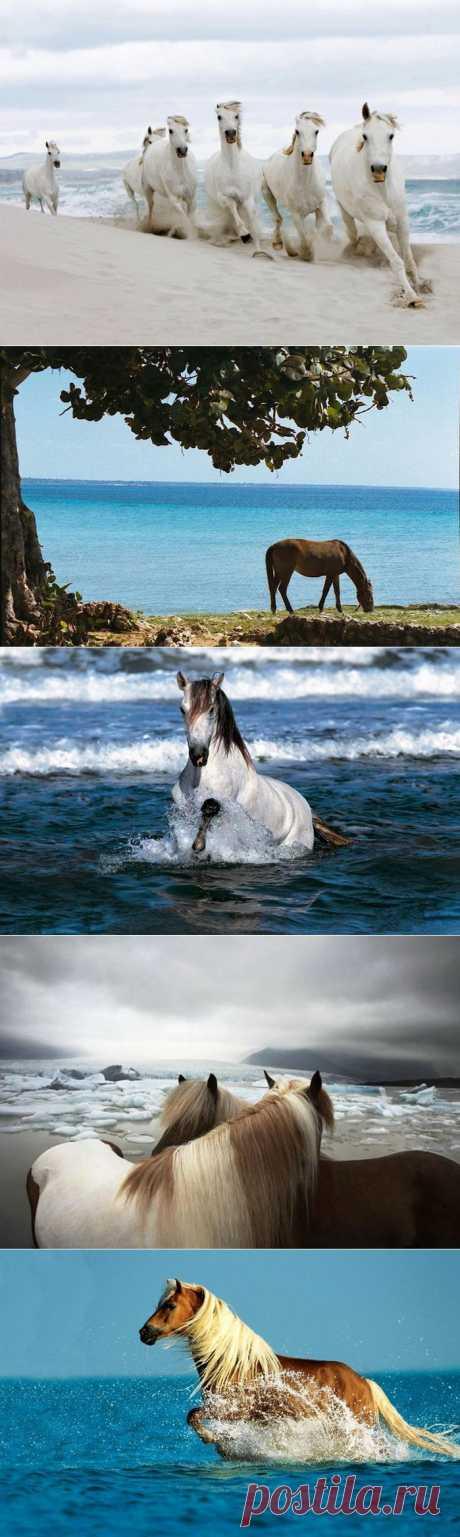 Лошади и море..