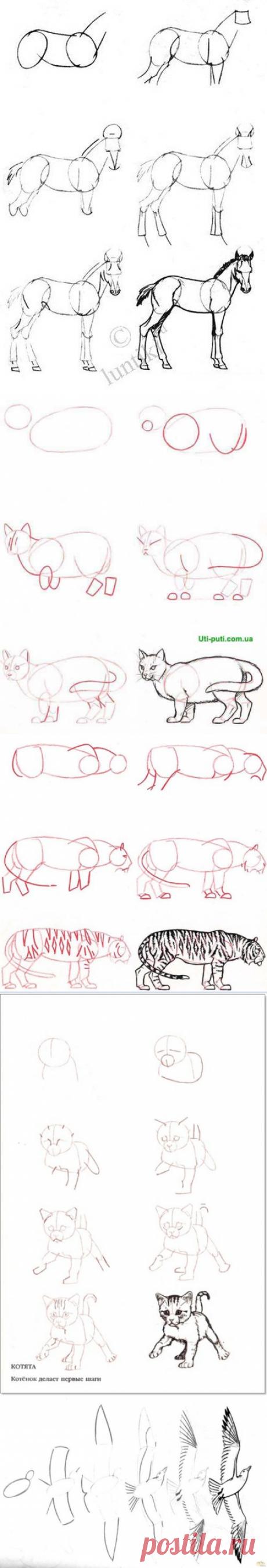 Учимся рисовать животных — Сделай сам, идеи для творчества - DIY Ideas