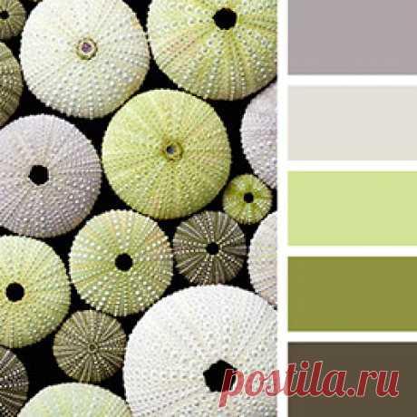 Удачные сочетания оливкового цвета в интерьере - смотрите палитры и подборки от известных дизайнеров на сайте Стоун Флор Новосибирск