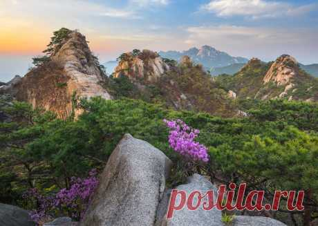 Flowers blooming on the rocks. Фотограф 류재윤