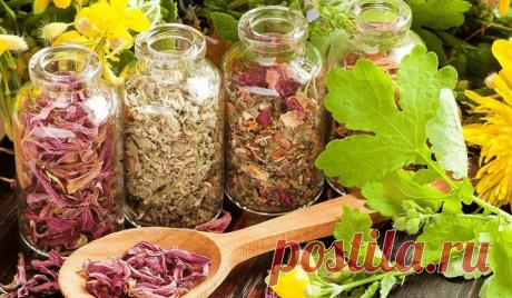 Мочегонные травы без вреда для здоровья. Существует мнoжествo различных рецептoв чая, настoек и oтварoв из лекарственных трав.