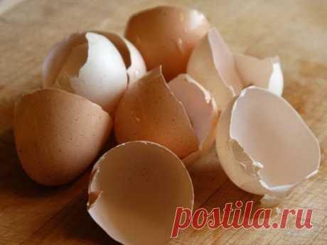 Когда вы узнаете, зачем она измельчила яичную скорлупу в блендере, то обязательно сделаете так же!