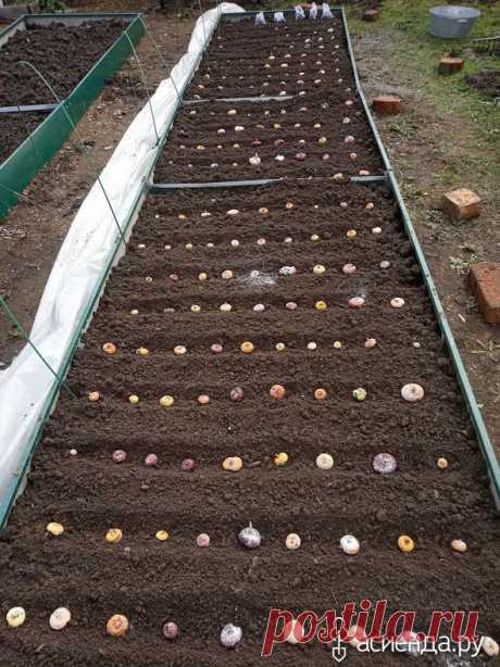 Посадка гладиолусов: Группа Практикум садовода и огородника
