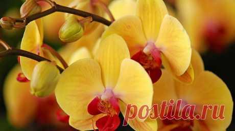 Вегетативное размножение орхидей.