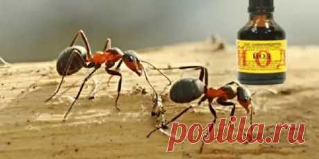 Муравьев уже на следующий день не стало: 2-х бутылочек йода мне хватило обработать 40 соток Многие, у кого есть дача или постоянно живут в частном секторе, сталкивались с проблемой муравьев и знают, как тяжело ее решить. Мы предлагаем рецептМногие, у кого есть дача или постоянно живут в частном секторе, сталкивались с проблемой муравьев и знают, как тяжело ее решить.Мы предлагаем рецепт