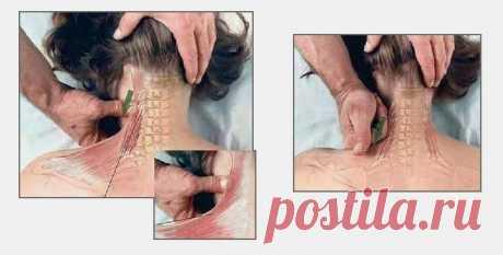 Как делать массаж: 7 картинок для понимания смысла движений рук — Полезные советы