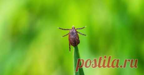 Чем обработать участок от клещей и других насекомых — Ботаничка.ru