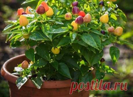ТОП-10 овощей и растений, которые можно выращивать зимой на балконе Большинство овощей и растений, выращиваемых летом и осенью, предпочитают хорошо освещенные места, что способствует лучшему созреванию и цветению. Однако не стоит забывать, что на одном балконе могут быть как солнечные, так и затененные участки, поэтому выбор растений должен осуществляться с учетом их потребности в свете.