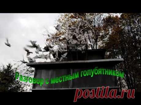 Мытищи. Разговор с местным голубятником