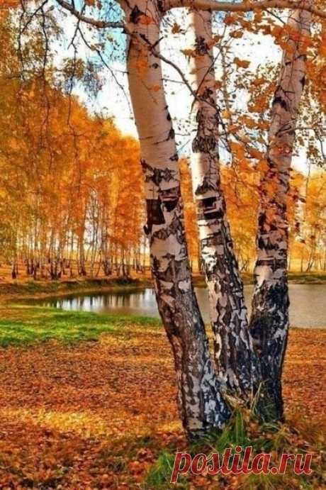 ღ...Осень бывает настолько красивой,  что воспоминание о ней сглаживает  суровость зимы...