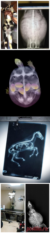 Такого вы еще не видели: как выглядят беременные животные под рентгеном