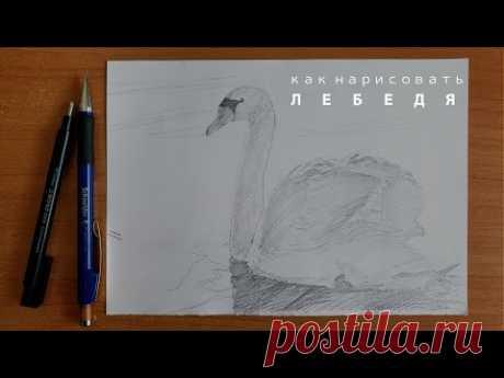 как нарисовать лебедя легко как нарисовать птицу карандашом юрий синчуков