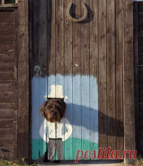 Осторожно! Любезная собака.