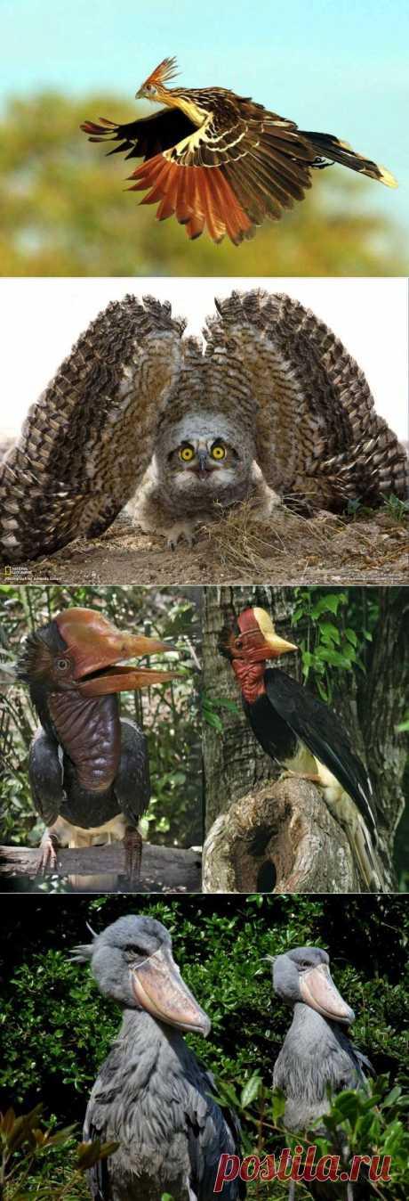 Самые необычные птицы - Фото - Калейдоскоп Эмоций