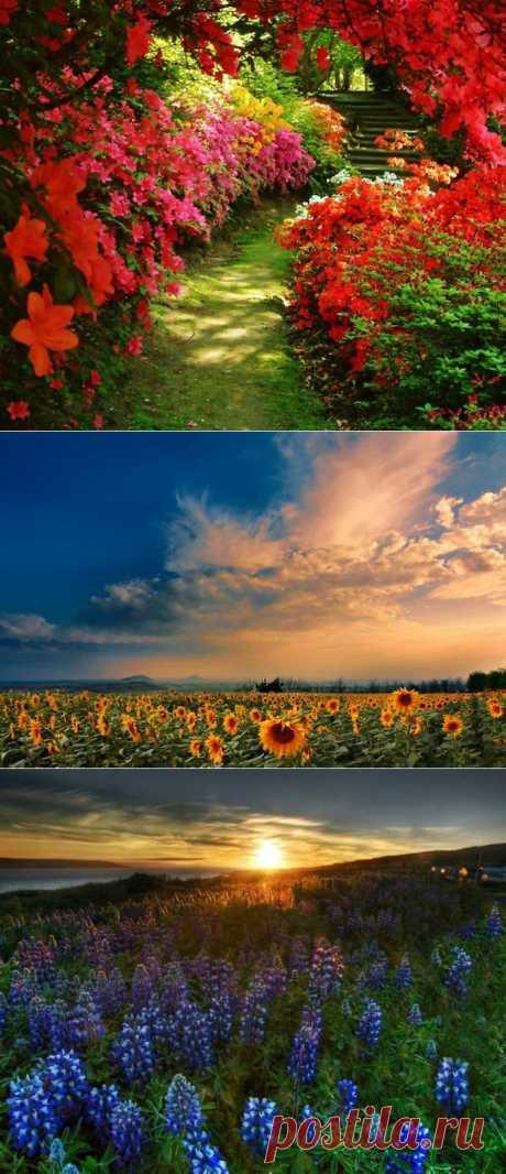 Много-много ярких цветов. Впитываем идеи!