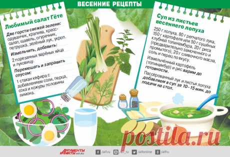 Инсулин из лопуха. Какие травы наладят обмен веществ и снизят сахар