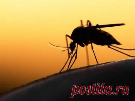 Как насекомые видят по ночам? | nashi-pitomcy.ru
