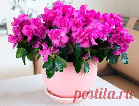 Хотите РОСКОШНЫЙ Цветник в КВАРТИРЕ? Тогда СОХРАНИТЕ и СЕКРЕТИКИ — Садоводка