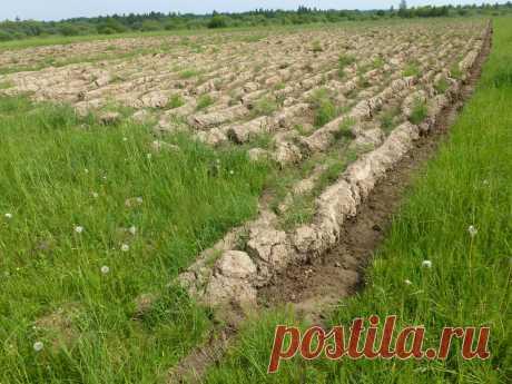 Не торопитесь оформлять земельный участок ! | игорь лукьянов | Яндекс Дзен