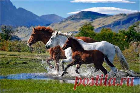 Лошади. Фото, часть 10 – Блог. Run, пользователь Марина Николаева | Группы Мой Мир