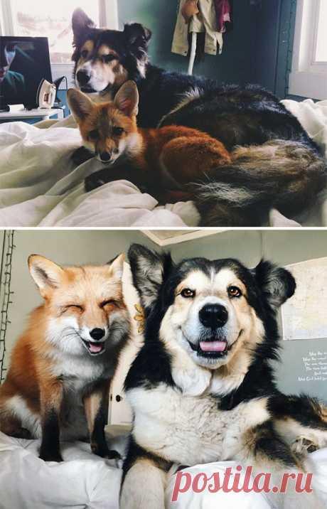 Фото животных, которые росли вместе