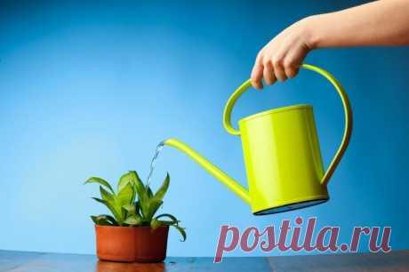 Чем поливать растения в доме, чтобы они хорошо цвели Чем можно поливать комнатные растения, чтобы они пышно и обильно цвели.