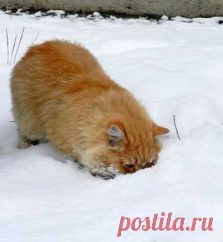 где мышка????где моя вкуснятинка?????