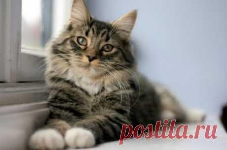 Вся правда о кошках: это интересно Казалось бы, кот - домашнее животное, но такое ощущение, что скоро люди станут реально поклоняться этому питомцу.