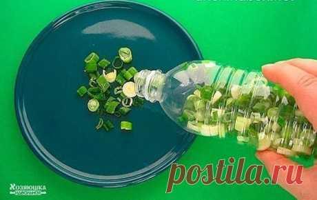 Все секреты длительного хранения зелени  Следует помнить, что главный враг витаминов, содержащихся в зелени – свет и тепло. Под воздействием солнечных лучей в зелени быстрее теряется витамин С – для этого бывает достаточно нескольких часов.  Поэтому хранить зеленые овощи нужно только в холодильнике, лучше всего - в плотно закрытом пакете или контейнере. Способов хранения зелени несколько, выбирайте любой.  Чтобы на столе всегда была действительно свежая зелень, воспользуйт...