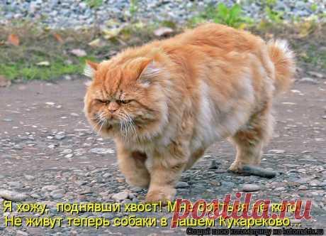 Гуляю сама по себе... | KotoMail.ru