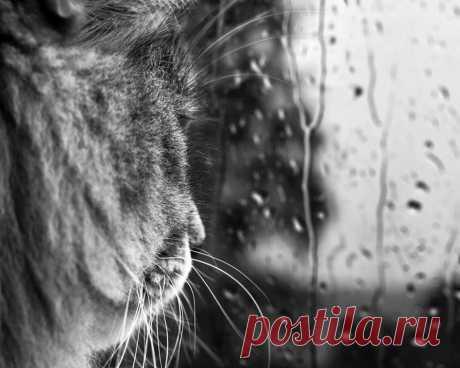 Кот и дождь