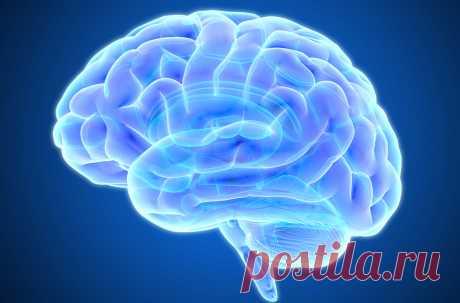 Так же как спортсмены принимают добавки для повышения их физической работоспособности, некоторые люди надеются улучшить остроумие и память с помощью так называемых мозговых бустеров. Конечно, никакая таблетка не может сделать тебя гением, если ты им не являешься. Однако, существуют ряд добавок, действие которых на улучшение работы мозга вполне доказано. Сейчас мы постараемся разобраться, какие из них них реально работают, а у каких нет доказательств их эффективности.