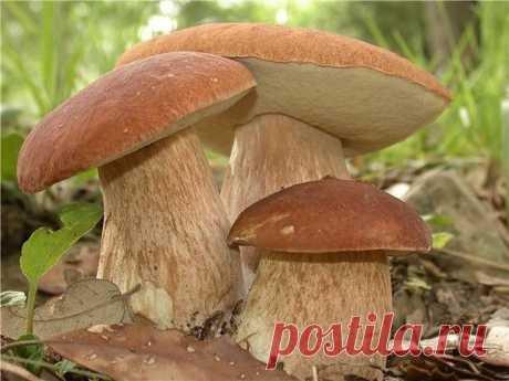 Интересные новости     Как вырастить лесные грибы на даче?
